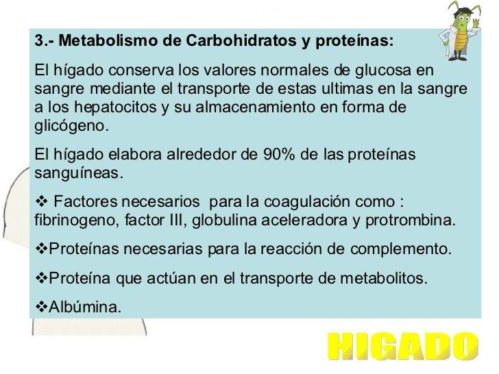 <ul><li>3.- Metabolismo de Carbohidratos y proteínas: </li></ul><ul><li>El hígado conserva los valores normales de glucosa...