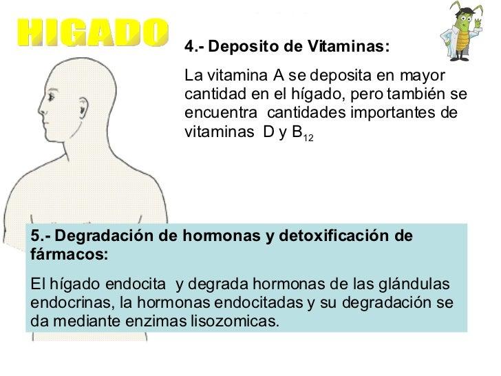 4.- Deposito de Vitaminas: La vitamina A se deposita en mayor cantidad en el hígado, pero también se encuentra  cantidades...