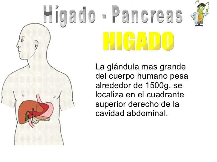 Hígado - Pancreas La glándula mas grande del cuerpo humano pesa alrededor de 1500g, se localiza en el cuadrante superior d...