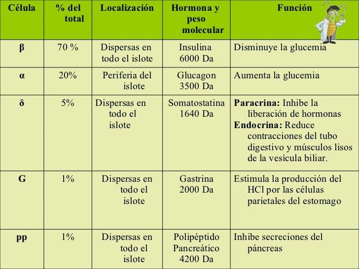 PANCREAS Inhibe secreciones del páncreas Polipéptido Pancreático 4200 Da Dispersas en todo el islote 1% pp Estimula la pro...