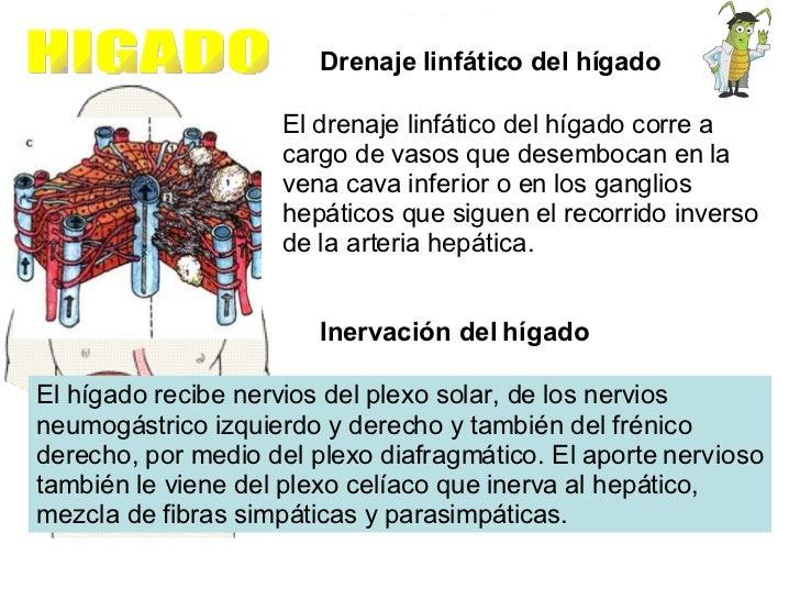 HIGADO Drenaje linfático del hígado  El drenaje linfático del hígado corre a cargo de vasos que desembocan en la vena cava...