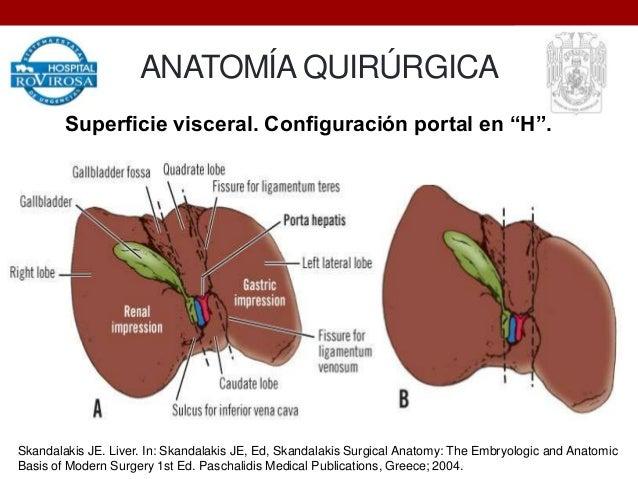 Anatomía quirúrgica y anatomía funcional del hígado.