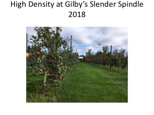 High Density at Gilby's Slender Spindle 2018
