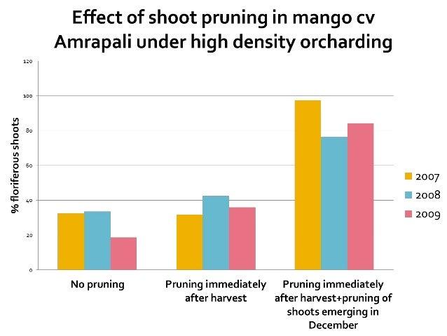 No pruning Pruning to 60% of canopy Pruning to 80% of canopy