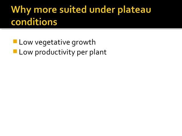 Low vegetative growth  Low productivity per plant