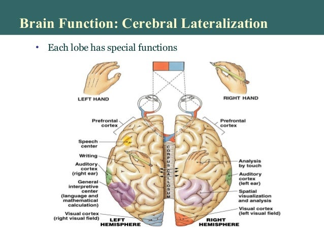 higher brain functions., (physiology), Human Body