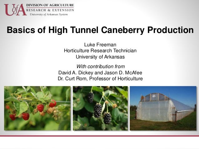 Basics of High Tunnel Caneberry Production Luke Freeman Horticulture Research Technician University of Arkansas With contr...