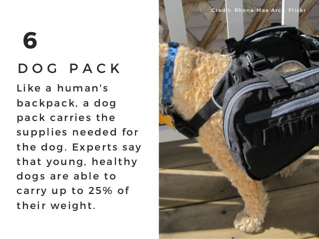 6 D O G P A C K Like a human' s backpack, a dog pack carries the supplies needed for the dog. Experts say that young, heal...