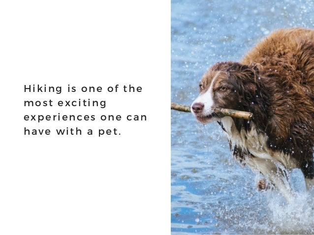 Hiking is one of the most exciting experiences one can have with a pet.