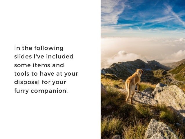 In the following slides I've included some items and tools to have at your disposal for your furry companion.