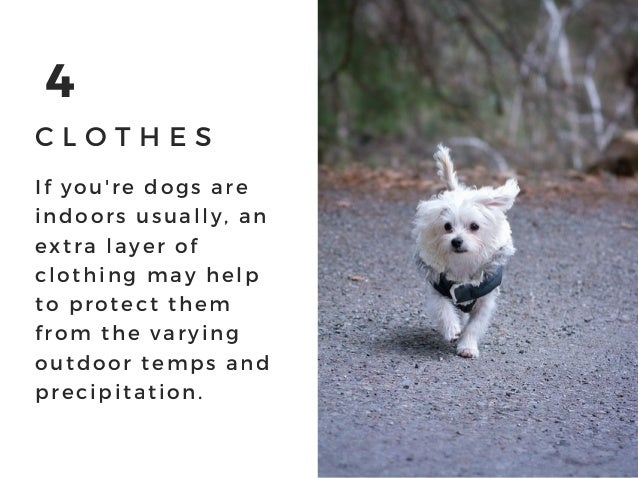4 C L O T H E S If you' re dogs are indoors usually, an extra layer of clothing may help to protect them from the varying ...