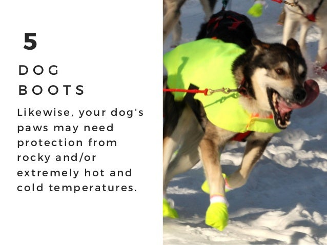 5 D O G B O O T S Likewise, your dog' s paws may need protection from rocky and/ or extremely hot and cold temperatures.