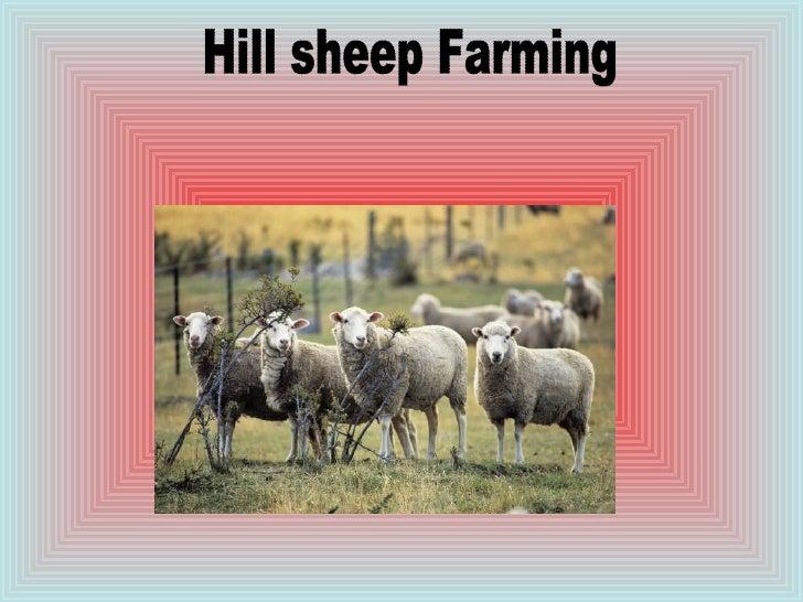 Hill sheep Farming
