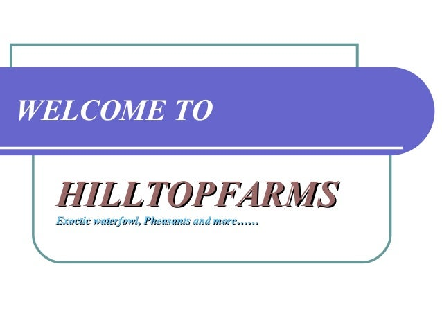 WELCOME TO HILLTOPFARMSHILLTOPFARMS Exoctic waterfowl, PheasantsExoctic waterfowl, Pheasants and more……and more……