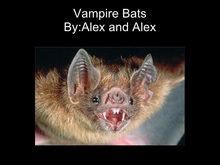 Vampire Bats By:Alex and Alex
