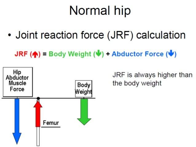 Hip biomechanics ccuart Images