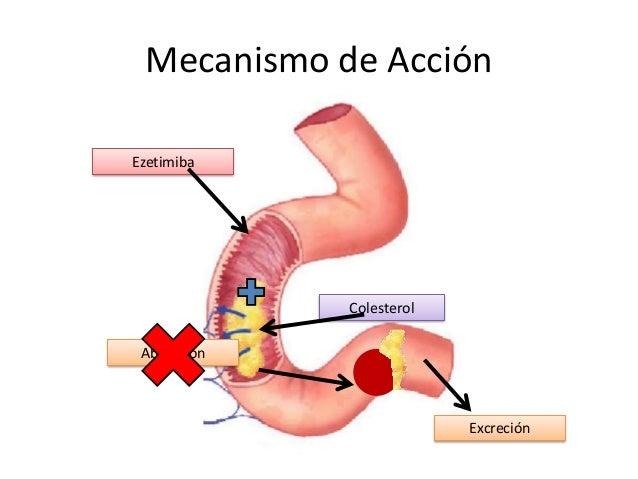 Mecanismo de Acción Absorción Ezetimiba Colesterol Excreción