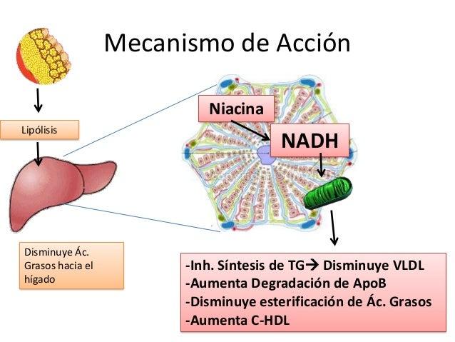 Mecanismo de Acción -Inh. Síntesis de TG Disminuye VLDL -Aumenta Degradación de ApoB -Disminuye esterificación de Ác. Gra...