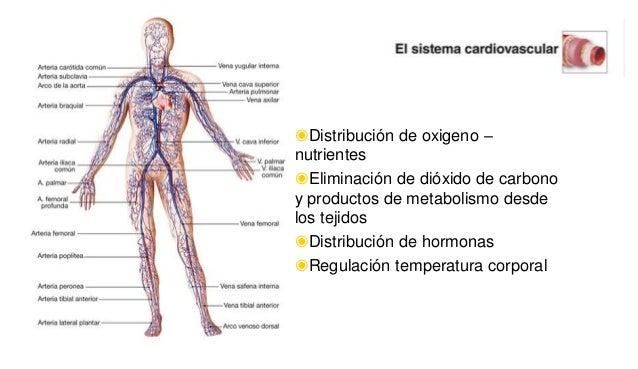 ◉Distribución de oxigeno – nutrientes ◉Eliminación de dióxido de carbono y productos de metabolismo desde los tejidos ◉Dis...
