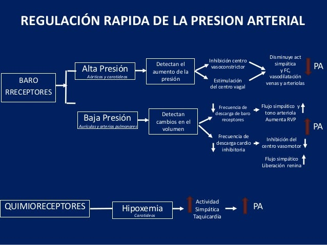Hipertension arterial y enfermedad renal cronica