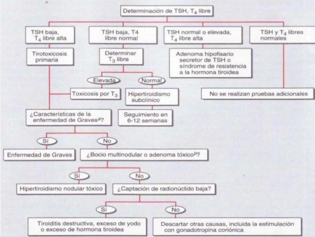 hipertiroidismo 638 x 479 · jpeg