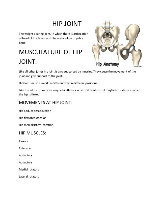 HIP JOINT The weight bearing joint, in which there is articulation of head of the femur and the acetabulum of pelvic bone....