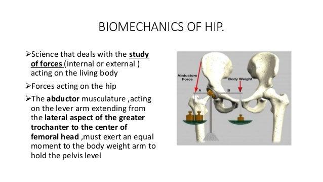 Hip Joint: Embryology, Anatomy and Biomechanics