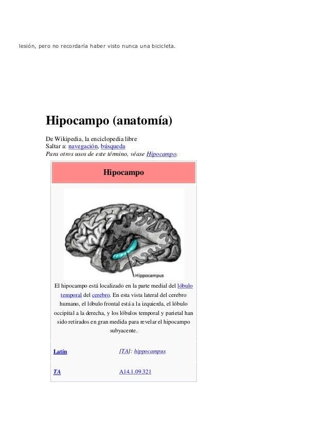 Hipo campo fisiologia