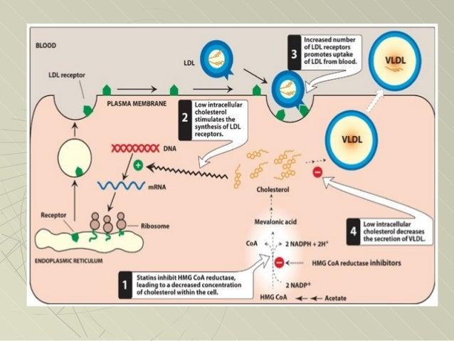 Estatinas mecanismo de accion