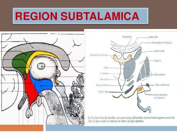 REGION SUBTALAMICA<br />