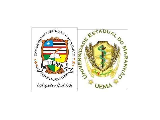 UNIVERSIDADE ESTADUAL DO MARANHÃO  CENTRO DE ENSINOS SUPERIORES DE CAXIAS  LIGA ACADÊMICA DE NEUROANATOMIA DE CAXIAS  MEDI...