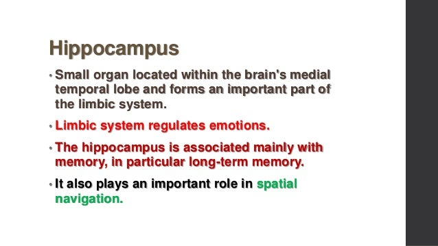 Hippocampus and method of loci
