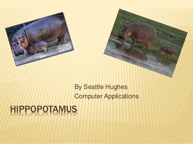 HIPPOPOTAMUS By Seattle Hughes Computer Applications