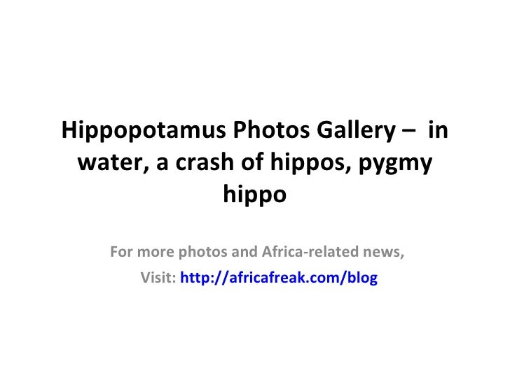 Hippopotamus Photos Gallery – in water, a crash of hippos, pygmy              hippo    For more photos and Africa-related ...