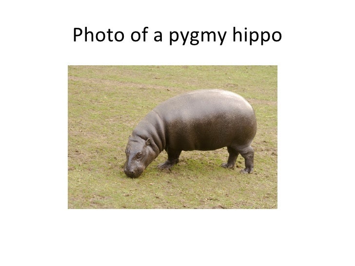 hippo download