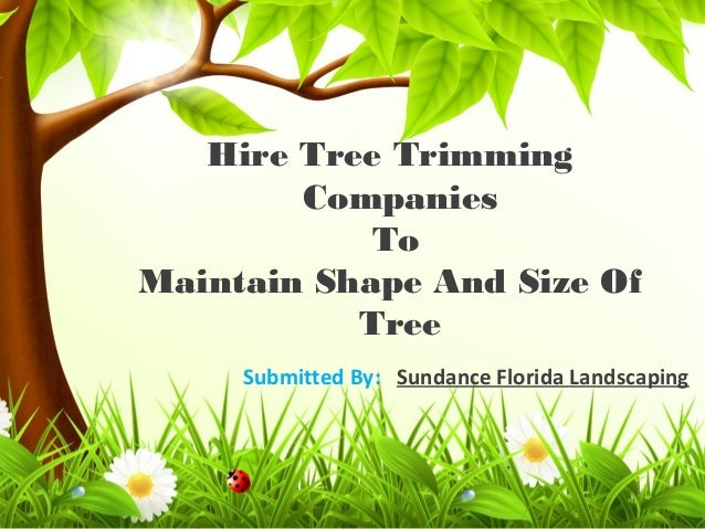 Hire Tree Trimming Companies To Maintain Shape And Size Of Tree Submitted By: Sundance Florida Landscaping