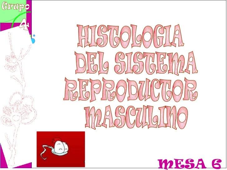 MESA 6 HISTOLOGIA DEL SISTEMA REPRODUCTOR MASCULINO