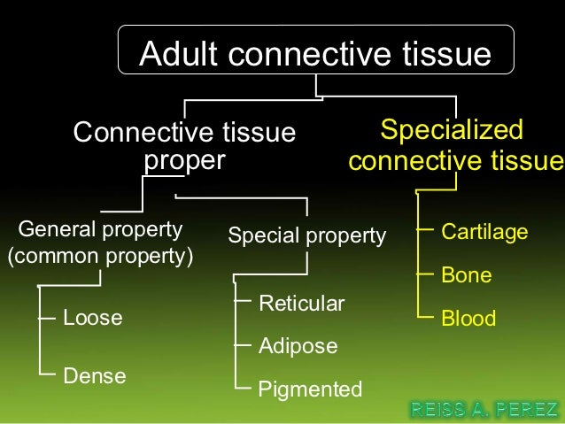 Connective tissue proper           (general property)Loose connect tissue Dense connect tissueLoose irregularlyarranged co...