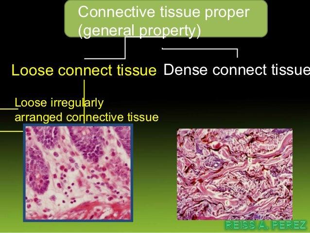 Loose connective tissue11/20/12           Assist. Prof. Kesorn Sripaoraya   16