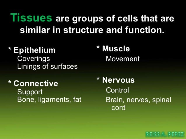 Connective TissueIt is a basic type of tissue, ofmesodermal origin,Which provides structuraland metabolic support fortissu...