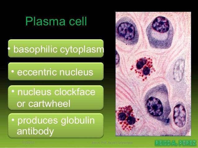 Dense regular              CTendon cell              = collagen fibers