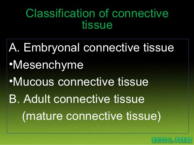 Connective tissue cells•Fibroblast•Macrophage•Mast cell•Plasma cell•Fat cell•Pigmented cell•Wandering blood cells