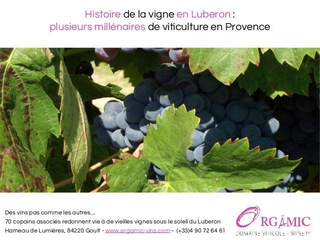 Histoire de la vigne en Luberon : plusieurs millénaires de viticulture en Provence Des vins pas comme les autres… 70 copai...