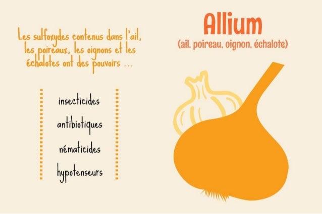 Histoires de légumes : informations sur les légumes