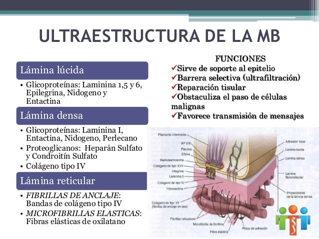  Lilimberth Muñoz