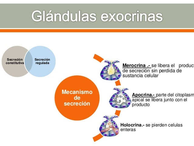 Hipofisis, glándula pineal, tiroides, paratiroides, páncreas, glándula suprarrenal, ovarios y testículo Sistema endocrino ...