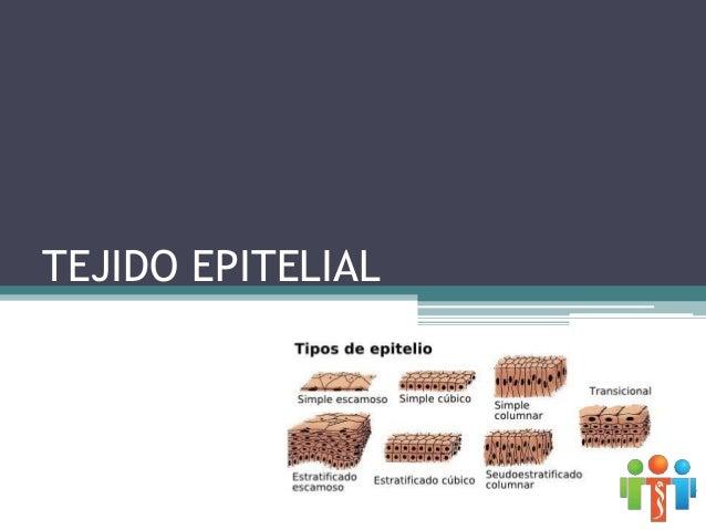 TEJIDO EPITELIAL Mesodermo Endodermo Ectodermo •Mucosa bucal y nasal •Córnea •Epidermis de la piel •Glándulas de la piel y...