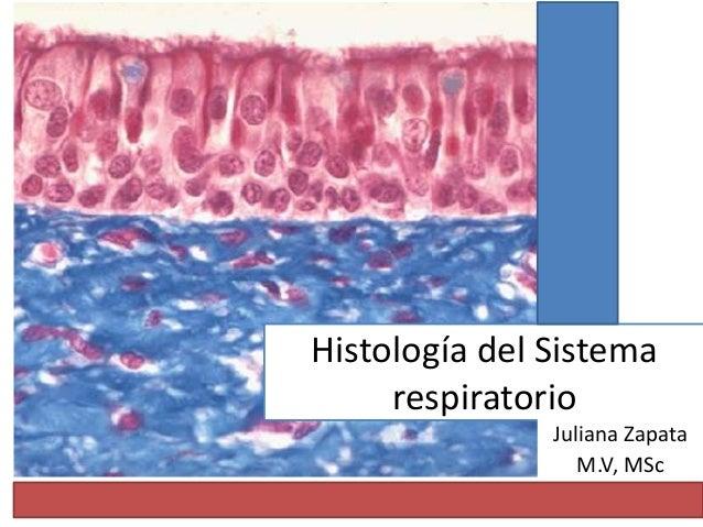 Histología del Sistema respiratorio Juliana Zapata M.V, MSc