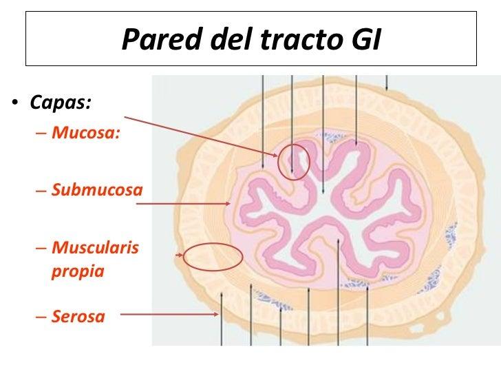 Histología del tracto gastrointestinal