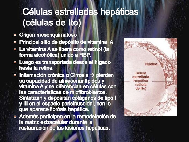 LOBULILLOS HEPÁTICOS<br />Hay tres maneras de describir la estructura del hígado en términos de una unidad funcional:<br /...